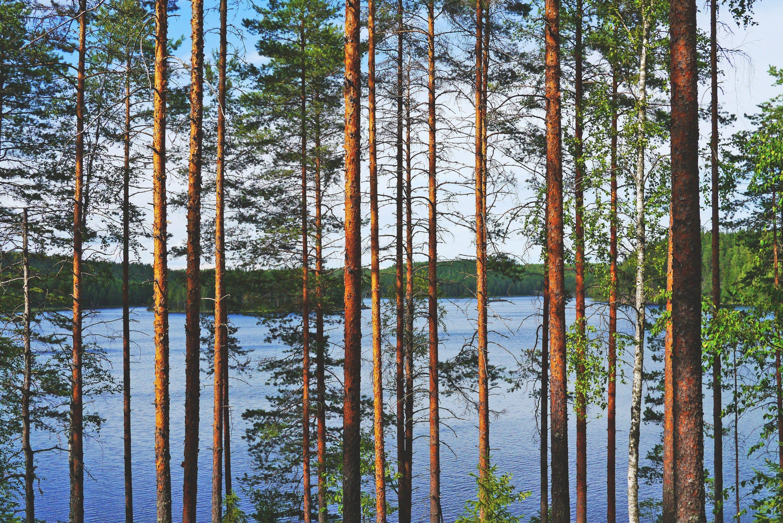 TIEDOTE: Jäppilän uimarannan uimakielto on päättynyt 11.8.2021 - copy